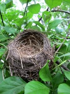 empty nest3