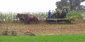 HarvestingCorn2
